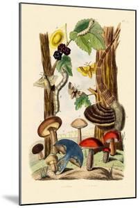 Mushrooms, 1833-39