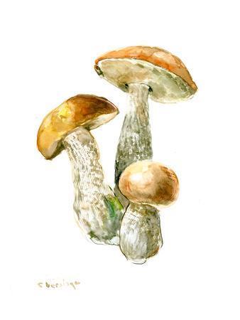 https://imgc.artprintimages.com/img/print/mushrooms3_u-l-f8ej9e0.jpg?p=0