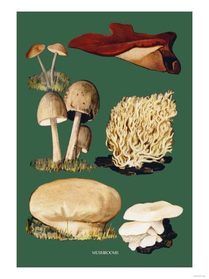 Mushrooms--Art Print