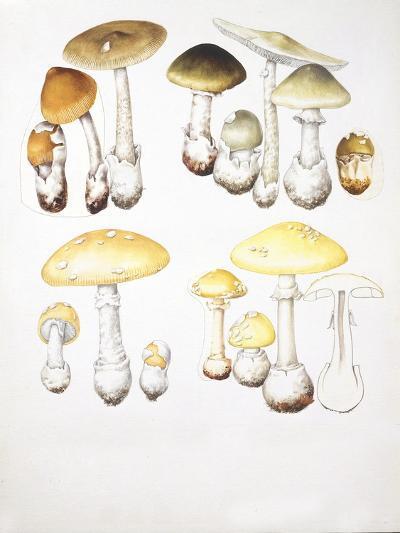 Mushrooms--Giclee Print