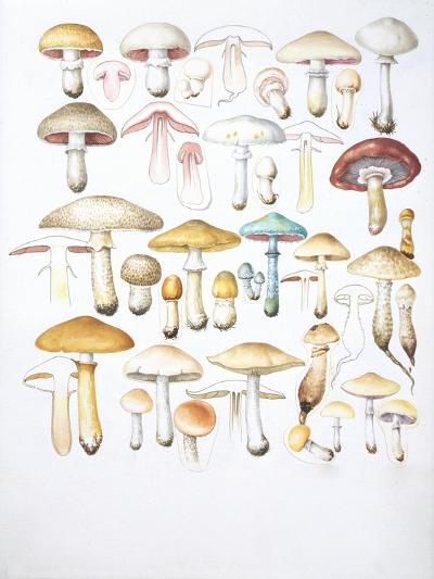 Mushrooms--Giclee Print