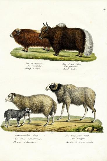 Musk Ox, 1824-Karl Joseph Brodtmann-Giclee Print