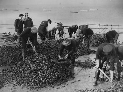 Mussel Catch--Photographic Print