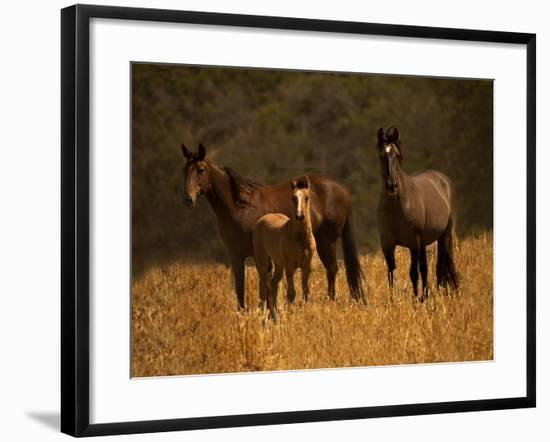 Mustang Family-Sally Linden-Framed Photographic Print
