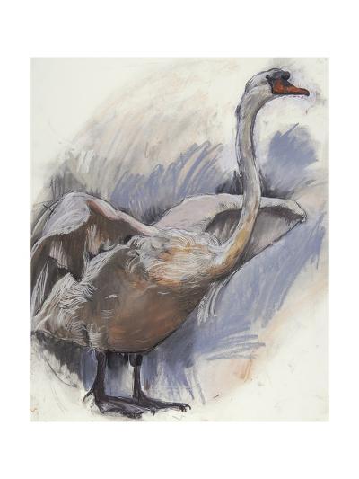 Mute Swan, 2008-Lara Scouller-Giclee Print