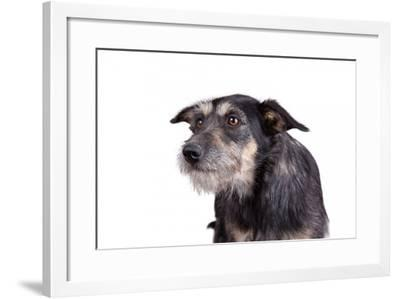 Mutt-Fabio Petroni-Framed Photographic Print