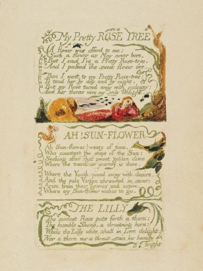'My Pretty Rose Tree,' and 'Ah! Sun-Flower,' and 'The Lily,' from 'Songs of Experience,' 1794-William Blake-Giclee Print