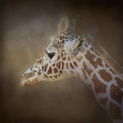 My Tallest Friend-Jai Johnson-Giclee Print