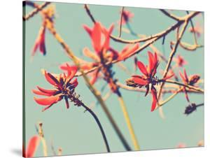 Flowers in Bloom on a Tree by Myan Soffia
