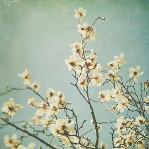 Flowers in Bloom by Myan Soffia