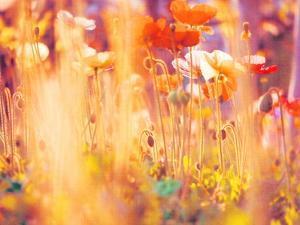 I Am Alice by Myan Soffia
