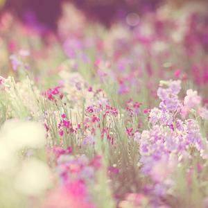 Monet by Myan Soffia