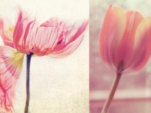 Poppy & Tulip by Myan Soffia