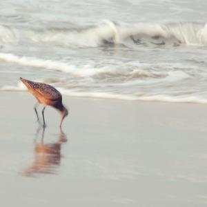 Soft Sea by Myan Soffia