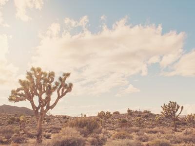 Sunshine & Joshua Trees