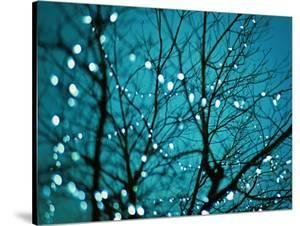 Tree at Night with Lights by Myan Soffia