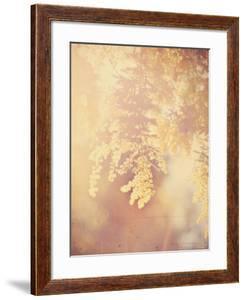 Tree in Bloom by Myan Soffia