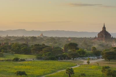 Myanmar. Bagan. Horse Carts and Cattle Walk the Roads at Sunset-Inger Hogstrom-Photographic Print
