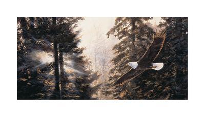 https://imgc.artprintimages.com/img/print/mystic-solitude-eagle_u-l-f5evxt0.jpg?p=0