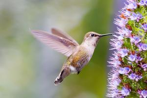 Bird by Mythungoc Photography