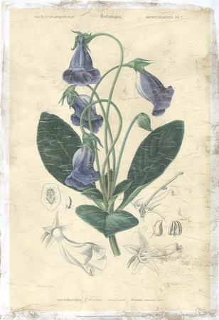 Floral Botanique I