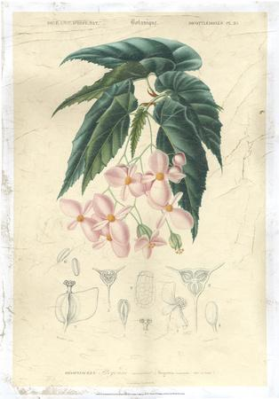Floral Botanique III