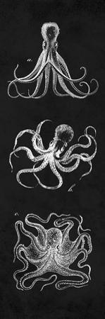 Octopi Study