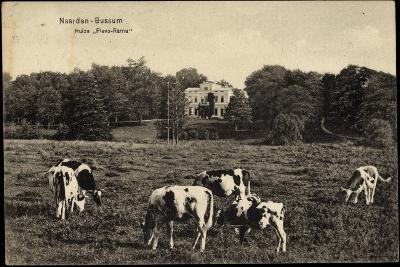 Naarden Bussum Nordholland, Kühe Auf Der Wiese, Huize Flevo Rama--Giclee Print