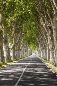 A Tree-Lined Road, Languedoc-Roussillon, France by Nadia Isakova