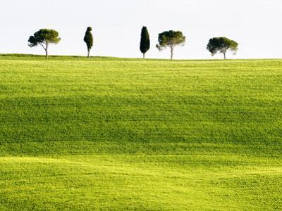Classic Tuscan Landscape, Near San Quirico, Valle De Orcia, Tuscany, Italy
