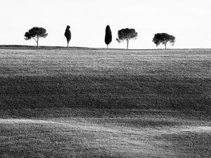 Classic Tuscan Landscape, Near San Quirico, Valle De Orcia, Tuscany, Italy by Nadia Isakova