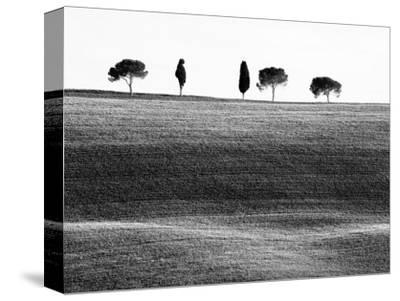Classic Tuscan Landscape, Near San Quirico, Valle De Orcia, Tuscany, Italy