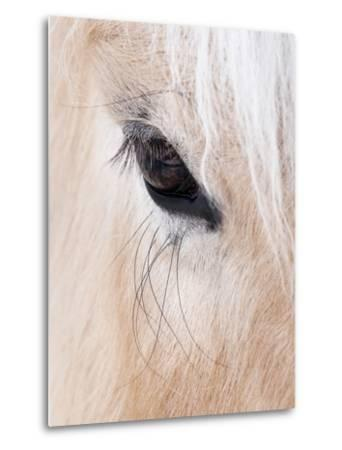 Close-Up of a Horse'S Eye, Lapland, Finland