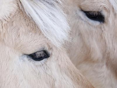 Close-Up of a Horse'S Eye, Lapland, Finland by Nadia Isakova