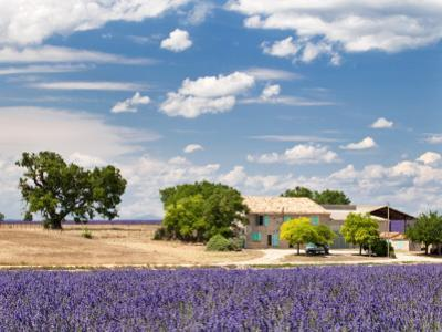 Farmhouse in a Lavender Field, Provence, France