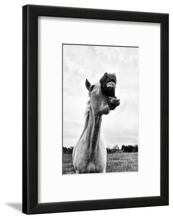 Grinning Horse, Camargue, France