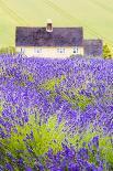 Sunflower-Nadia Isakova-Photographic Print