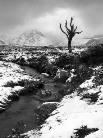 Lonely Tree in Rannoch Moor, Scotland, UK