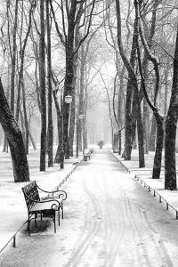 Mikhailovsky Gardens in winter, Saint Petersburg, Russia by Nadia Isakova