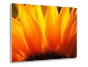 Sunflower by Nadia Isakova