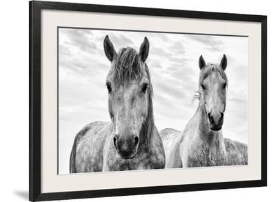 Beautiful Animals Black And White Photography Artwork For Posters Prints Art