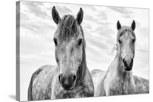 White Horses, Camargue, France by Nadia Isakova