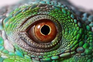Iguana Eye by NagyDodo