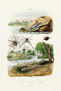 Naked Sea Slug, 1833-39