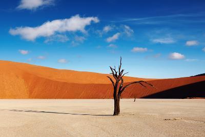 Namib Desert-DmitryP-Photographic Print