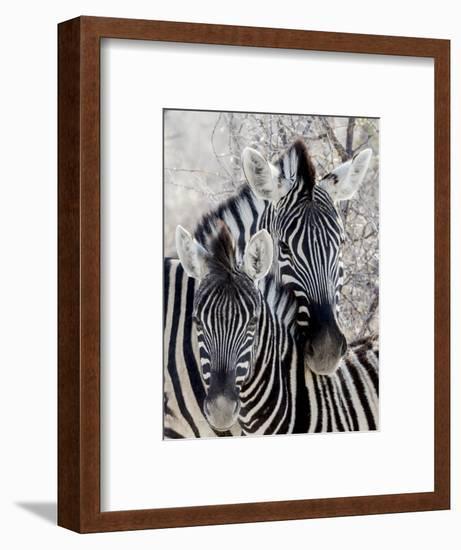 Namibia, Etosha National Park. Portrait of Two Zebras-Wendy Kaveney-Framed Photographic Print
