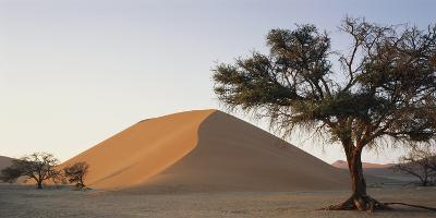 Namibia, Namib Naukluft National Park, Acacia Tree and Red Sand Dunes, Sossusvlei-Paul Souders-Photographic Print