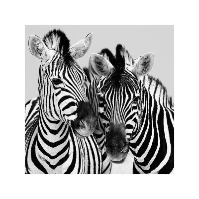 Namibia Zebras-Nina Papiorek-Giclee Print