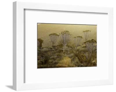Namibia-Art Wolfe-Framed Photographic Print