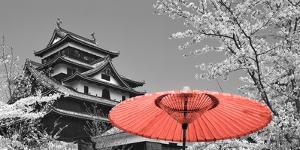 Color Pop, Cherry Blossom Matsue Castle Japan, Living Coral by Nan